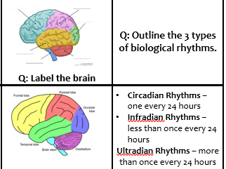 biopsychology revision Introduction all living organisms experience rhythmic changes, which tend to coincide with seasonal or daily environmental changes most organisms (including humans) have internal biological clocks these are called endogenous pacemakers, which are influenced by external environmental factors.