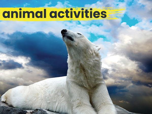 Polar Bear Comprehension