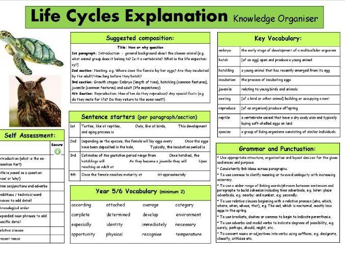 Animal Life Cycle Explanation Knowledge Organiser