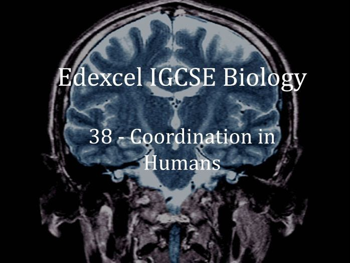 Edexcel IGCSE Biology Lecture 38 - Coordination in Humans
