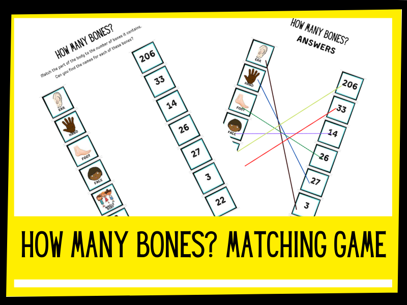 How many bones? KS1 KS2 worksheet