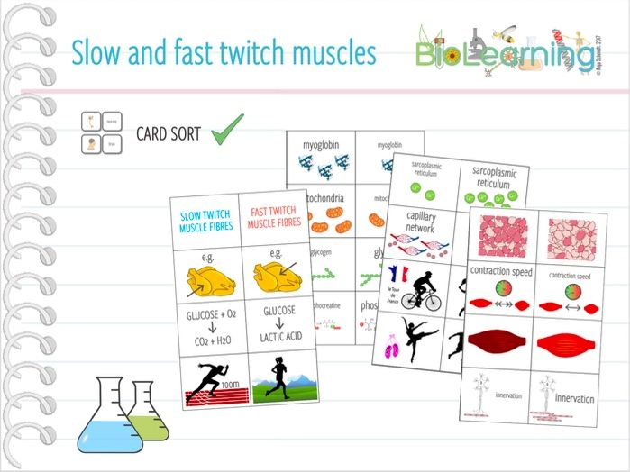 Slow and fast twitch muscle fibres - Card sort (KS5)