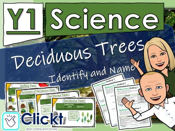 Year 1 Science: Plants: Deciduous Trees - Identify and Name