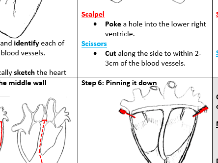Heart Dissection (the ultimate classroom guide sheet!)