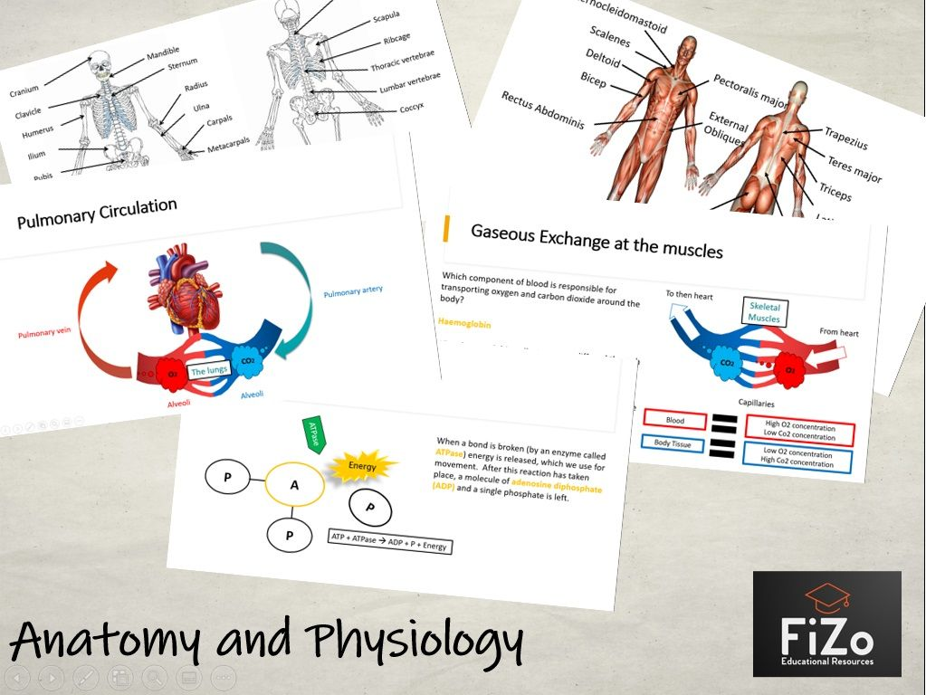 BTEC Sport L3 - Anatomy and Physiology Full Unit
