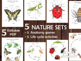 5 NATURE SETS, Bundle of Insects anatomy and life cycle prints