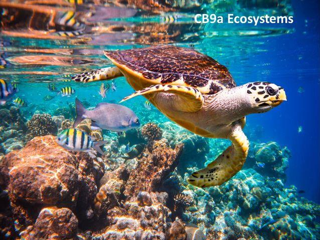 CB9a Ecosystems