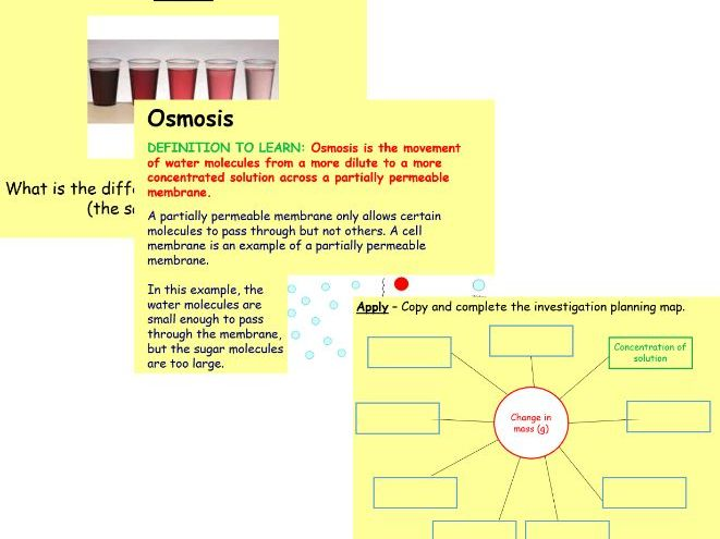 Osmosis: Lesson and Investigation