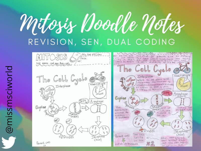 Mitosis Science Doodle Notes
