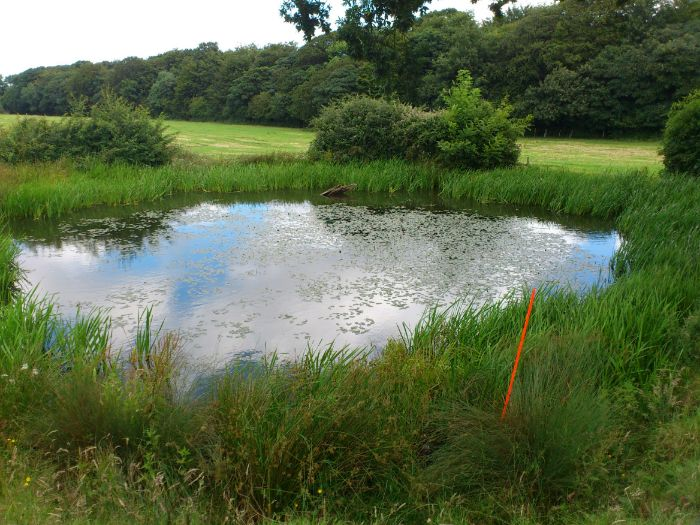 Safety Advice for Ponds and River Visits