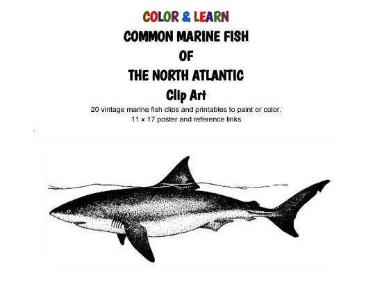 C O L O R & L E A R N - Common Marine Fish of the North Atlantic - Clip Art