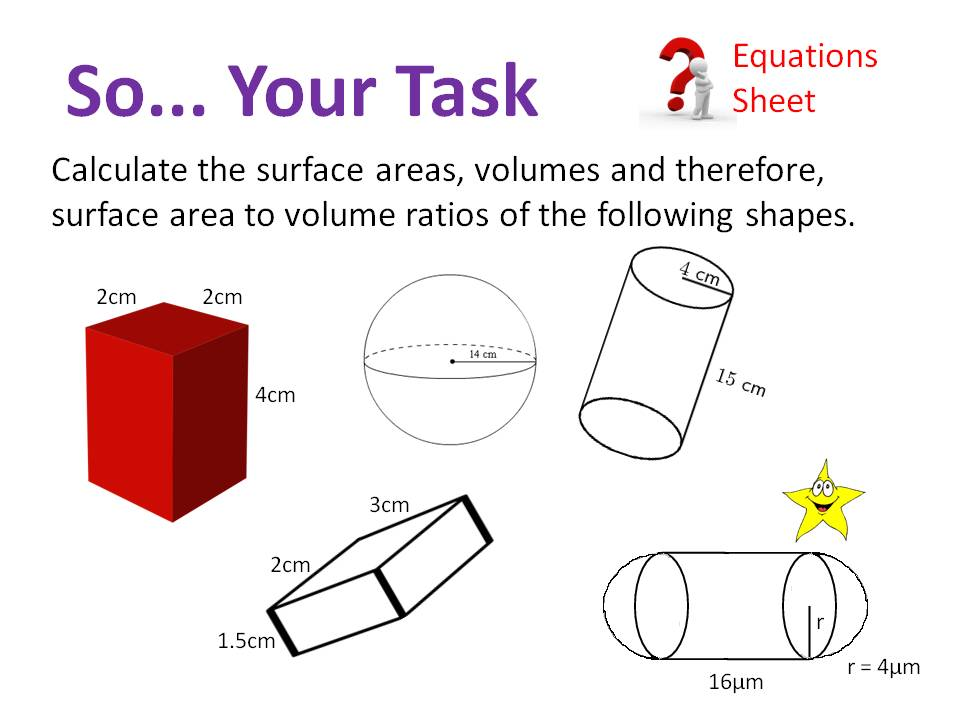Exchange Surfaces (Surface Area to Volume) - OCR AS/A Level Biology