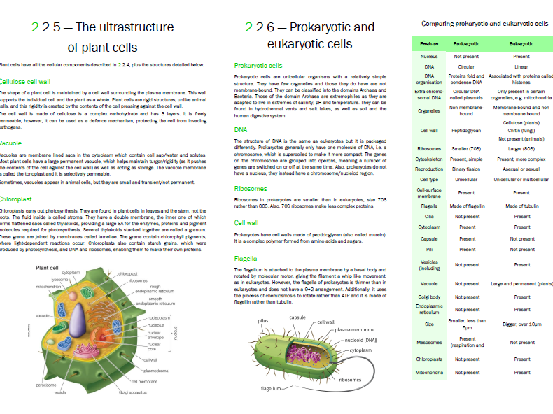New OCR Biology A Level Eukaryotic and Prokaryotic Cell Structure revision notes