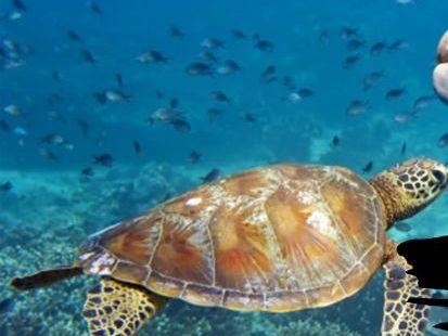 Aquatic Habitat - Marine Habitat