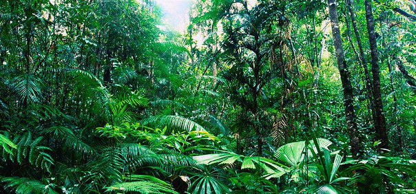 Topic 8: Forests Under Threat - Direct Threats to The Tropical Rainforest