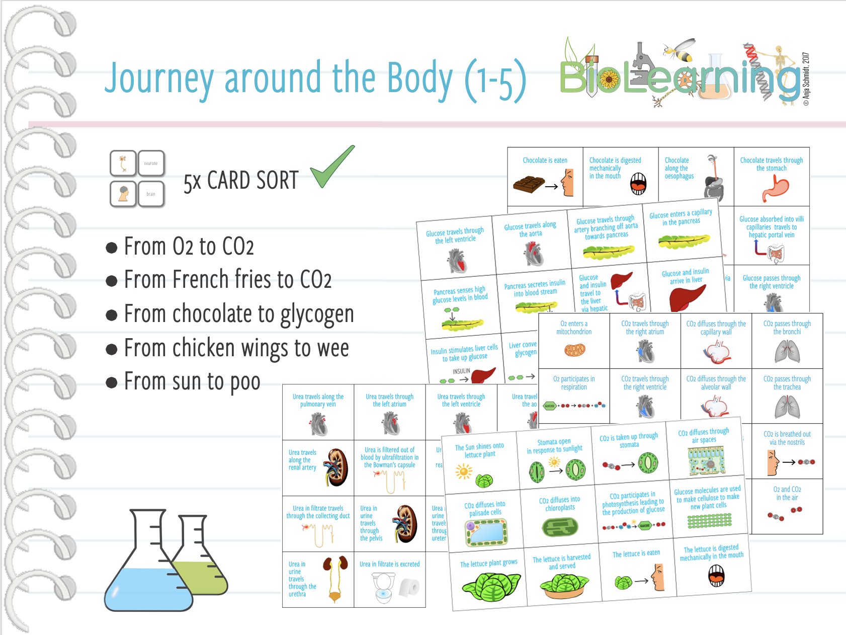 Journey around the body (1-5) - 5x Card sort (KS3/KS4)