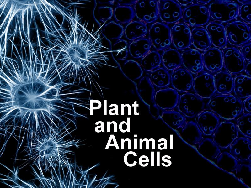 KS3 AQA Drawing Plant and Animal Cells