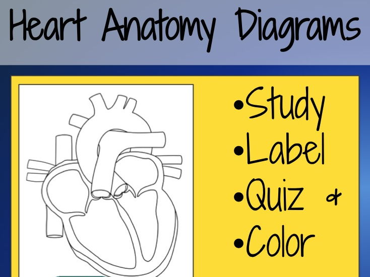 Heart Anatomy Diagrams and Quiz