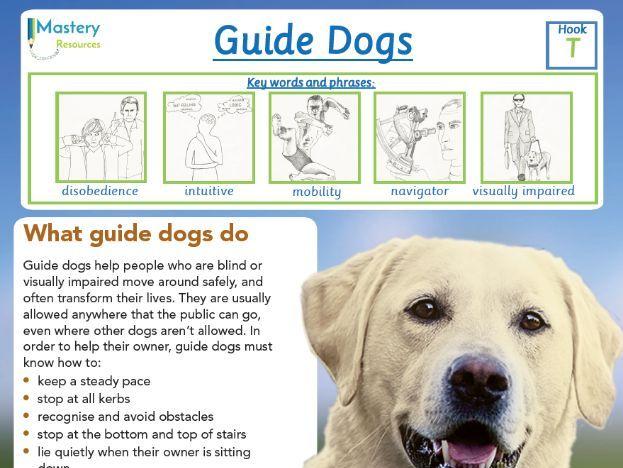 Guide Dogs Comprehension KS2