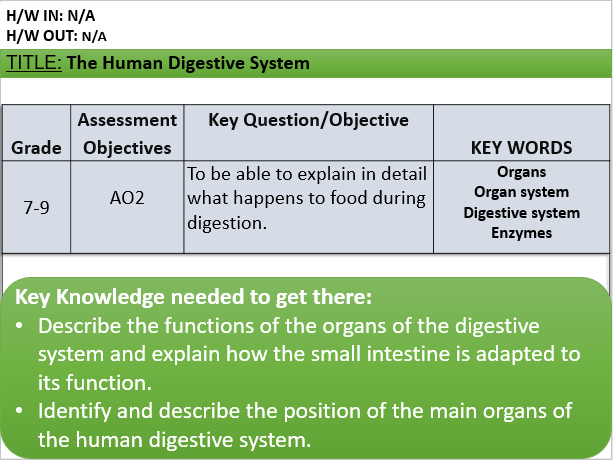 B3.2 The Human Digestive System