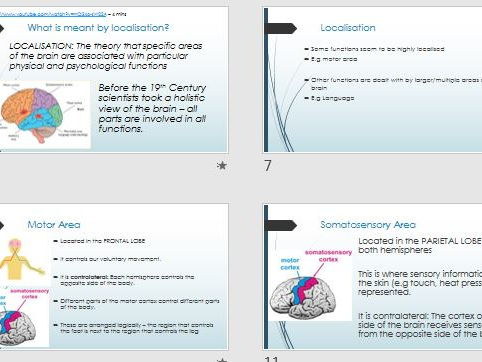LOCALISATION OF FUNCTION - Full Lesson (ppt & activity) - AQA Psychology Biopsychology Year 2