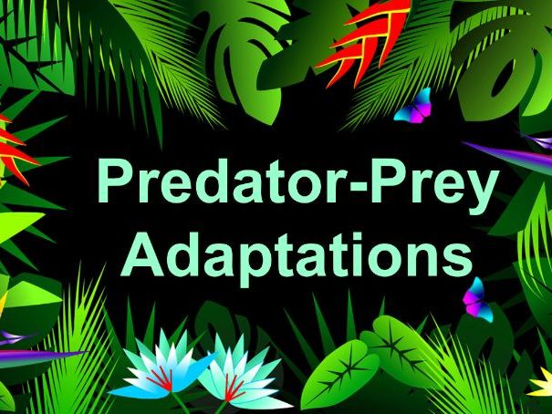 Predator-Prey Adaptations KS3 AQA (Basic Lesson)