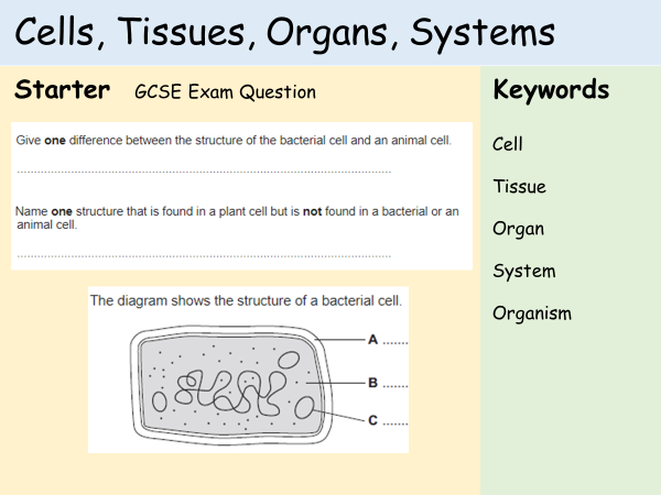 KS3 Cells - Lesson 7 - Cells, Tissues, Organs, Systems