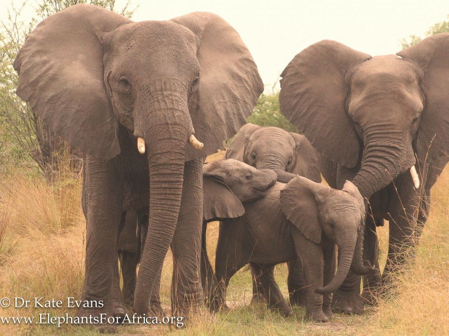 AFRICA WEEK: Elephants for Africa lessons