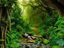 Model example for write to describe - KS3 KS4 - Amazon Rainforest