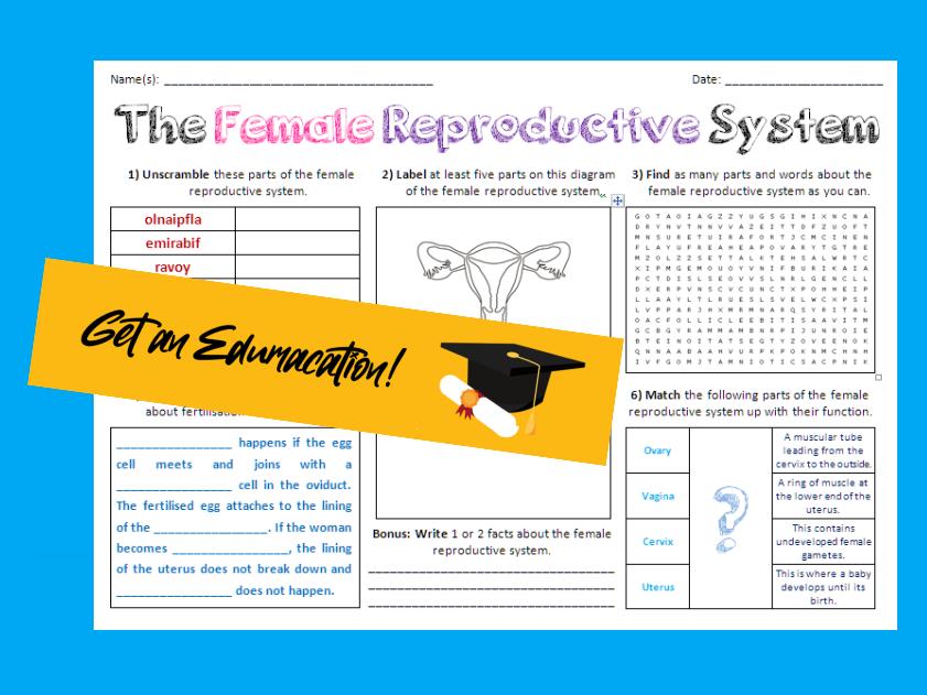 Female Reproductive System - Large Activity Sheet