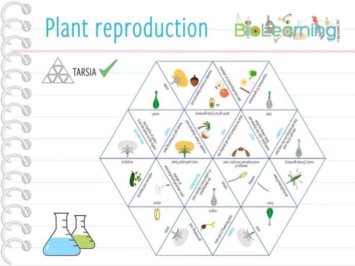 Flowering plant reproduction - Tarsia (KS3)