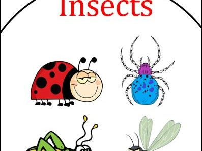 Insects Labels to Colour and Match
