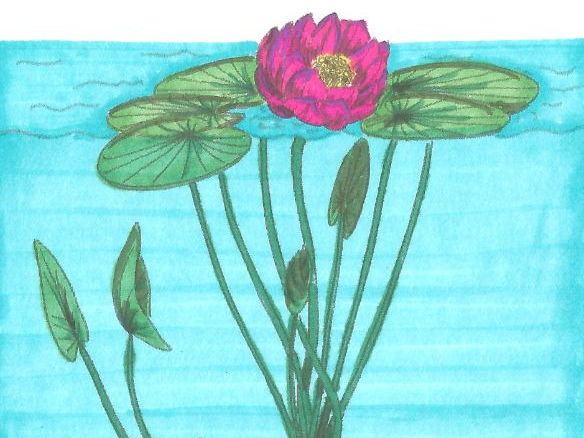 Montessori Nomenclature Cards: Parts of a Lotus