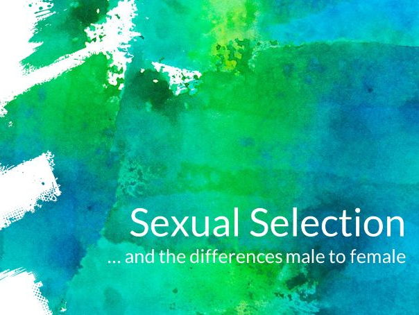 Animal Behaviour: Sexual Selection