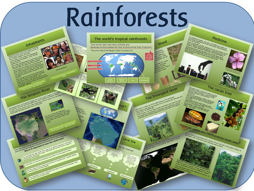 The Rainforest - powerpoint lessons and activities