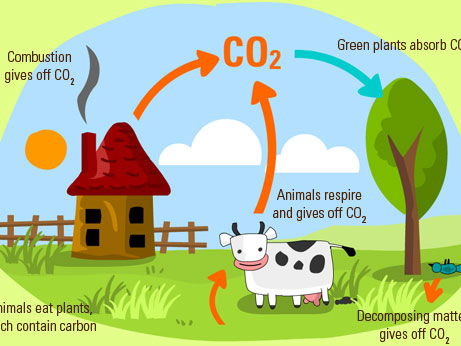 The Carbon Cycle (Lesson Observation)