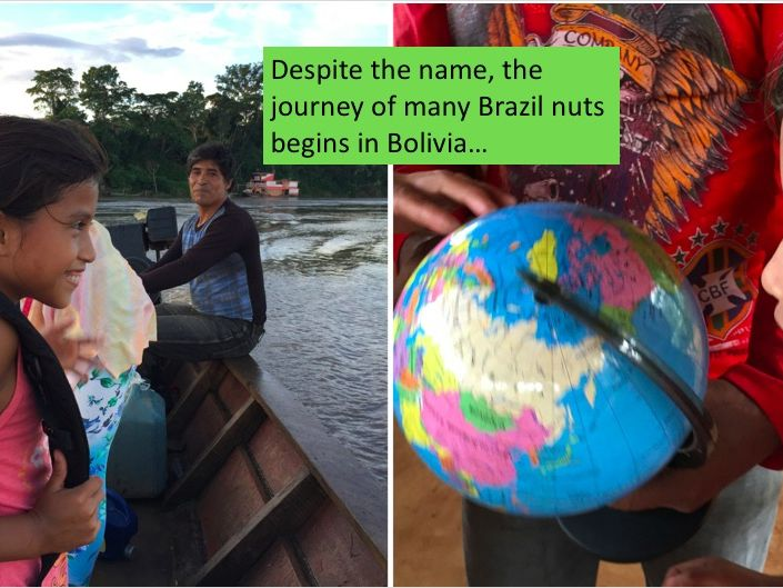 Fairtrade Brazil Nut Ecology presentation and worksheet