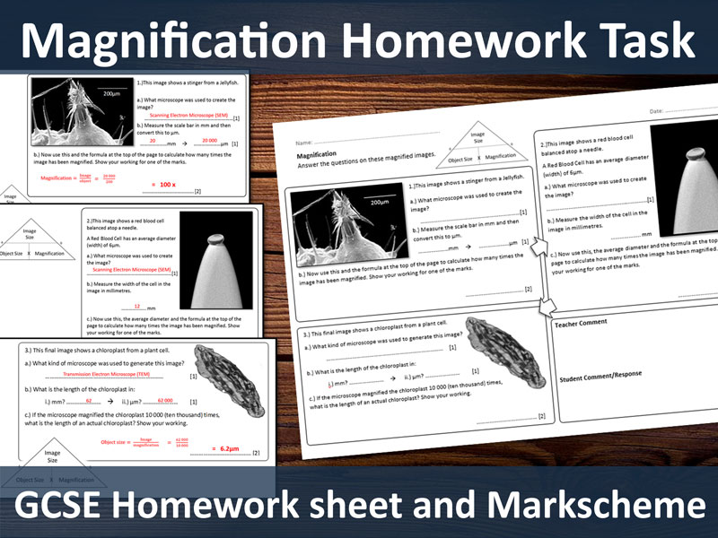 Magnification Calculations Homework (GCSE Microscopes)