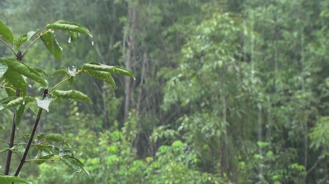 Learn at Chester Zoo - What is the climate like in the rainforest? [VIDEO]