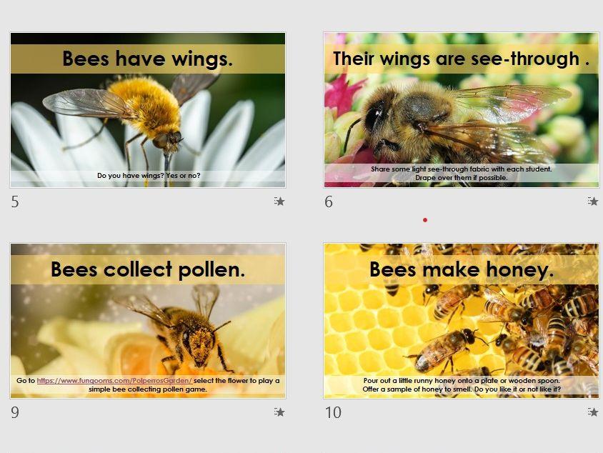 Bee Sensory Science