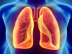 Gas exchange/respiratory system A level Biology exam style questions with answers