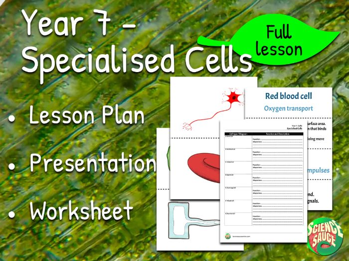 Year 7 - Specialised Cells (Full Lesson)