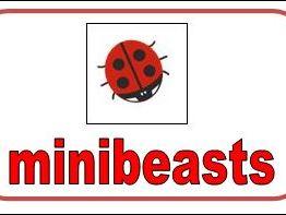 Minibeast Flashcards