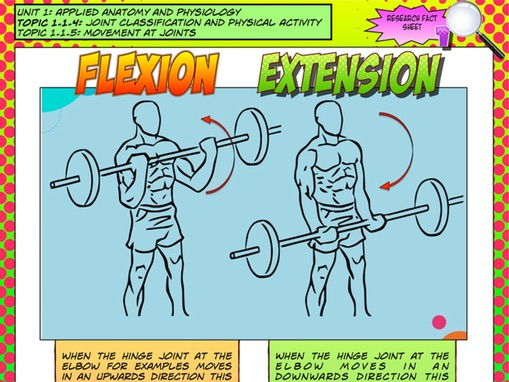 NEW GCSE PE – Unit 1 – Topic 1 – Lesson 3 - Joint Classification and Movement - Flexion and Extensio
