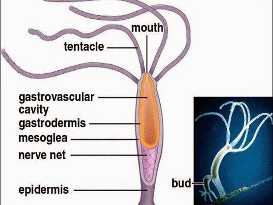 Excretion in Lower Organisms