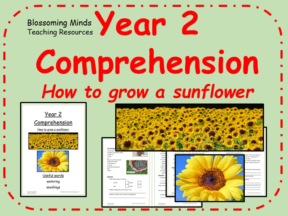 Year 2 non-fiction comprehension - How to grow a sunflower
