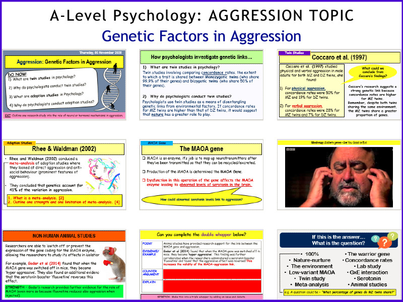 A-Level Psychology - GENETIC FACTORS in Aggression (Year 2 Aggression topic)