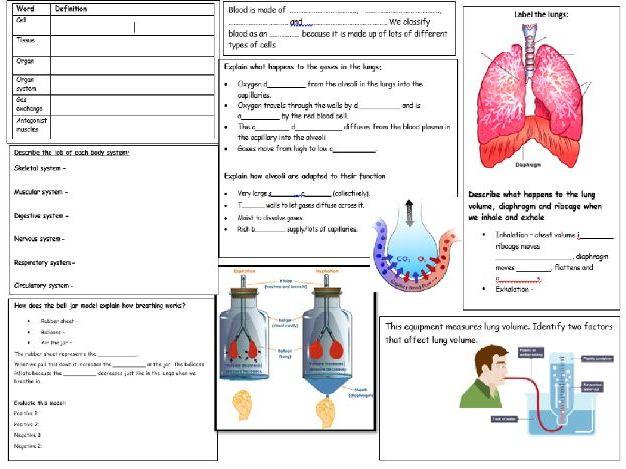 Human Body Revision Mat KS3 Science