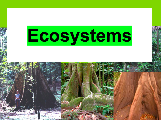 Ecosystems! Bundle