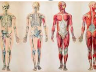 Online Learning PE - Personal Health Programme Part Three (Anatomy and Physiology)